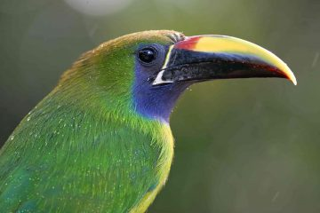 Monteverde Wildlife